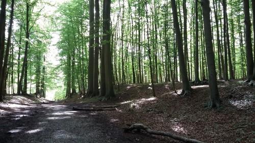 Warandepark van Tervuren tussen de Keizerinnedreef en de Molenbergstraat
