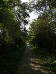 Houtkanten op talud bij holle weg