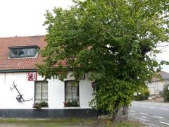 Gekandelaarde grensboom bij café De Linde