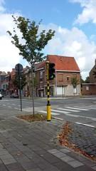 Brugge Leopold I-laan vredesbomen als laanaanplanting (https://id.erfgoed.net/afbeeldingen/277549)