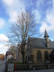 Koningslinde als herdenkingsboom