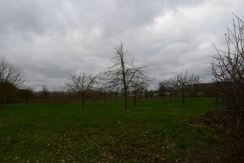 Borgloon Kerniel Colenstraat Nieuwe aanplant