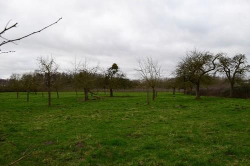 Borgloon Kerniel Colenstraat hoogstamboomgaard (2)