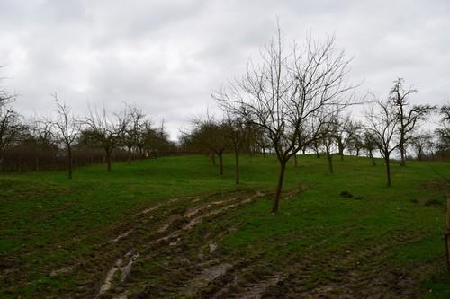 Tongeren Overrepen Hoogstamboomgaard bij Herkenhoeve (3)