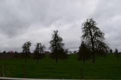 Cluster hoogstamboomgaarden nabij het kasteel van Gors-Opleeuw