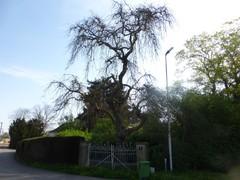 Kasteel Weyer en herenboerenpark