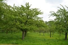 Hoogstamboomgaard van het kasteel van Rullingen
