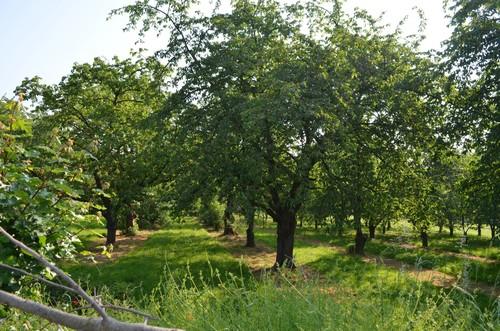 Sint-Truiden Diestersteenweg naast 83 kersenboomgaard