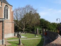 Ninove Pollare Sint-Kristoffelstraat Beuk (3) (https://id.erfgoed.net/afbeeldingen/288015)