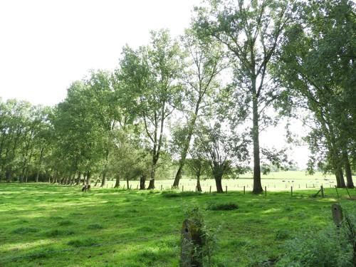 Ninove Denderwindeke Houtkant weiland
