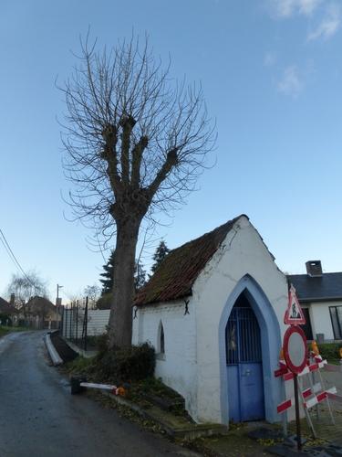 Ninove Pollare Echel kapelboom