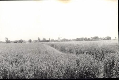 Windmolen van Hoeke