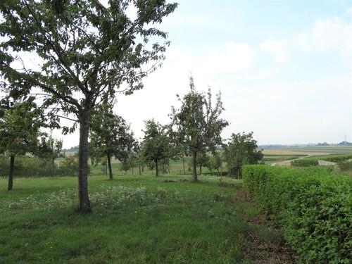 Hoogstamboomgaard met kornoeljehaag