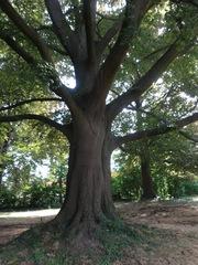 collectie parkbomen bij landhuis Pierco