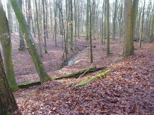Zoniënwoud tussen Hoeilaart en Sint-Genesius-Rode