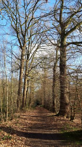Voetweg Doomkerke - Gallatasbossen
