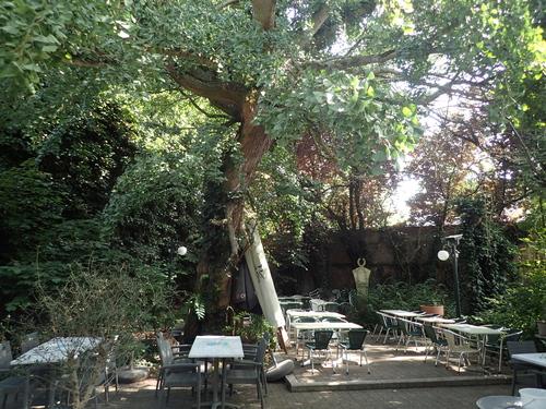 Ginkgo biloba in tuin Blauwe Schuit