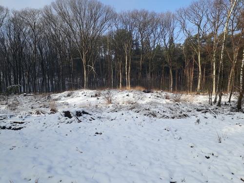 Grafheuvelcomplex Bladelse Heide