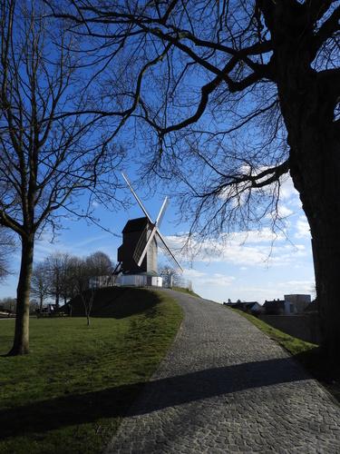Windmolen De Koelewei