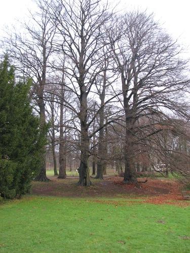 Lubbeek Pellenberg Weligerveld 6  bomengroep